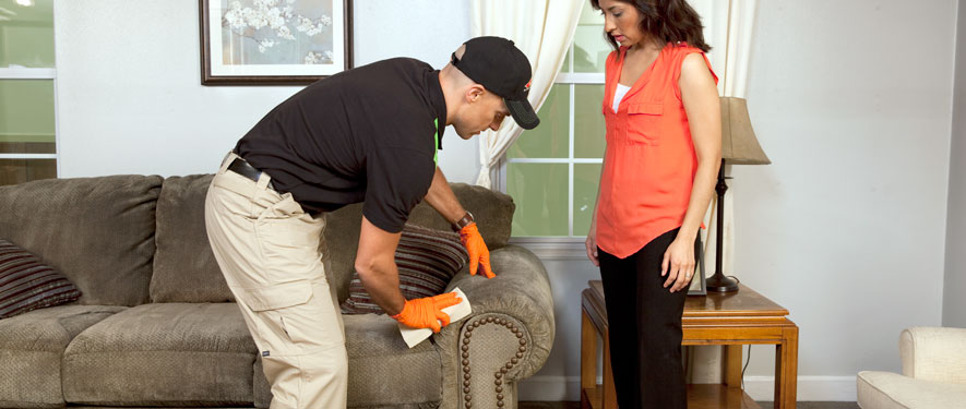 Whitemarsh, PA carpet upholstery cleaning